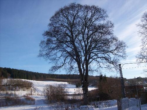 Thalheim Erzgebirge im Winter mit Schnee